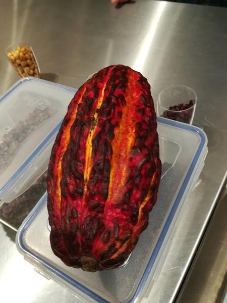 Kakao Bohne